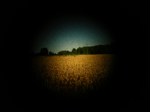 fields6.jpg
