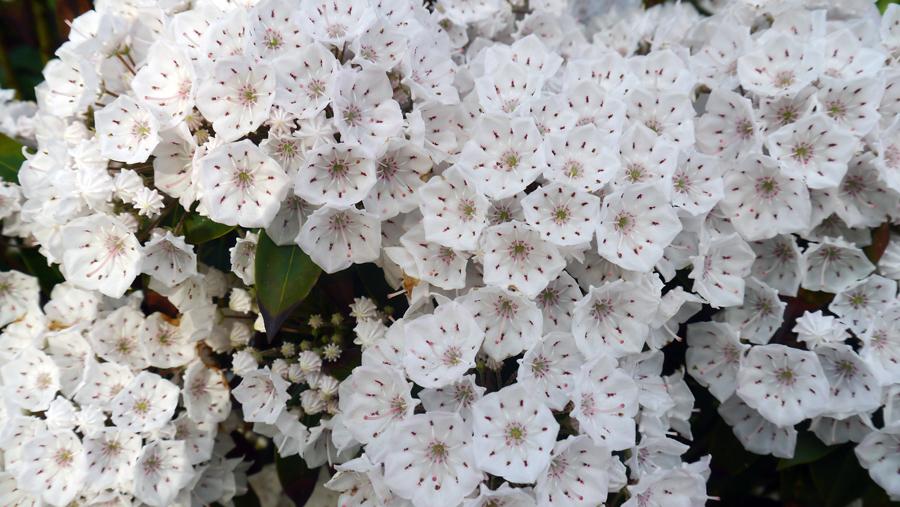 fleur11